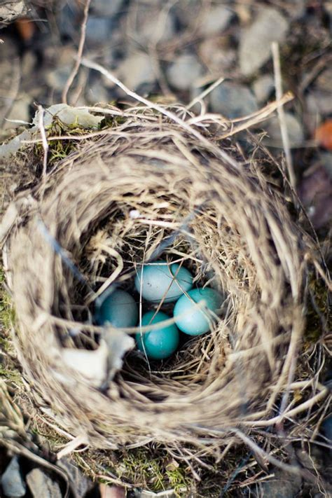 robins egg color 28 images color crush robin s egg tiny blue eggs look at the perfection of the nest home