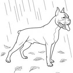 Boxer Puppy Coloring Pages boxer coloring page free printable coloring pages