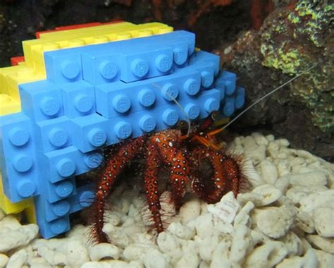 Hermit Crab Heat L by Hermit Crab Ditches Shell For A Lego Shell Bit Rebels