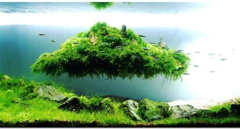Ikan Rednose Untuk Aquarium Dan Aquascape jenis jenis ikan cantik yang dapat di pelihara pada aquascape