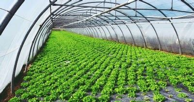 Plastik Uv Untuk Atap Green House pabrik dan distributor plastik uv bahan utama untuk membuat green house