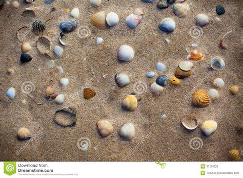 sabbia bagnata sabbia bagnata della spiaggia con il fondo delle