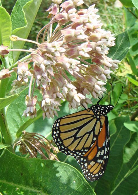 attracting butterflies and hummingbirds to your backyard attracting butterflies and hummingbirds to your backyard