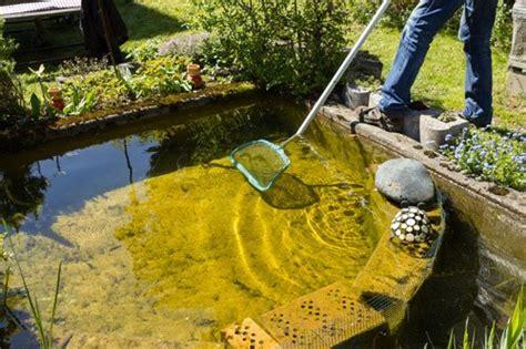 algen im teich diese tipps helfen