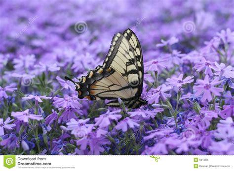 immagini sui fiori farfalla sui fiori immagine stock immagine di metamorfosi
