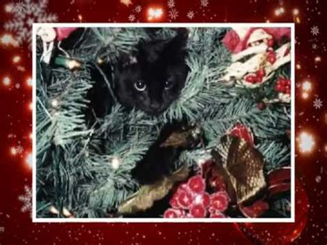 merry christmas funny cats style happy  year  youtube