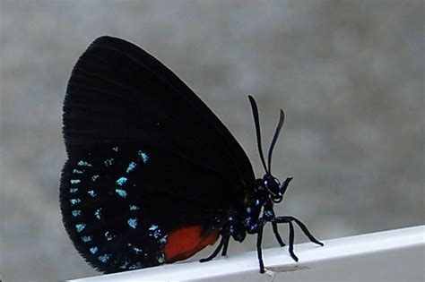 madama butterfly flo n the go flo n the go brookgreen gardens lowcountry zoo and center for