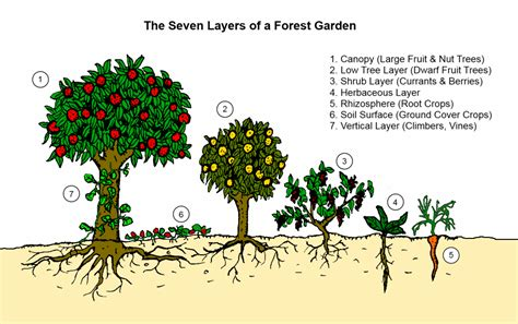 layout of forest nursery 7 small scale intensive systems deep green permaculture