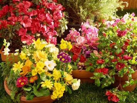 Container Flower Gardens Arrange Containers To Maximize Landscape Hgtv