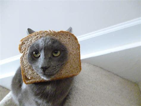 Cat In Bread Meme - hot new internet meme breading cats