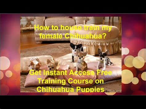 how to house train a chihuahua funny cat videos funny kittens funniest animal compilations funny pranks cat