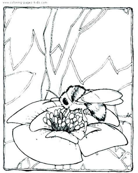 Bee Coloring Pages Pdf