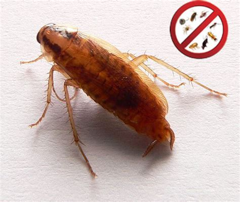 best cockroach cockroach fogger best roach fogger forgetpests home victory