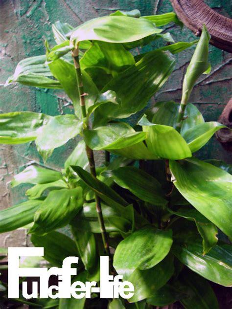Pflege Pflanzen 3204 by Pflege Pflanzen Pflege Pflanzen Probleme Grunde