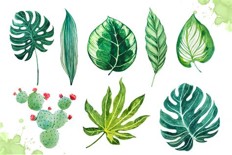 Poster Set Of 2 Tropical Leaves Cactus 2xa4 watercolor tropical leaves set 2 by alex green