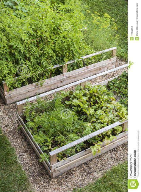 wooden vegetable garden triyae backyard vegetable garden business various