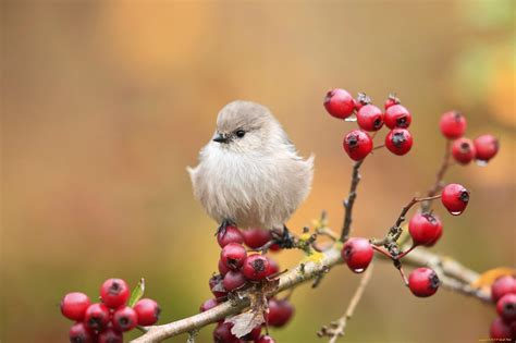 wallpaper cute bird cute bird on branch hd desktop wallpaper widescreen