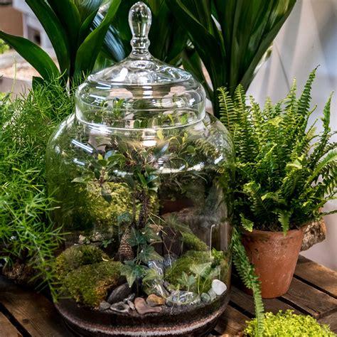 buy indoor jungle plant arrangement  bottle shaped glass