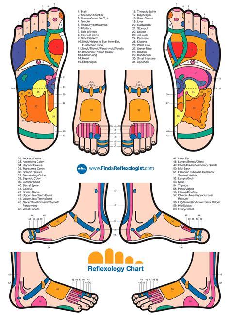 reflexology diagram of foot reflexology foot charts alternative medicine resources