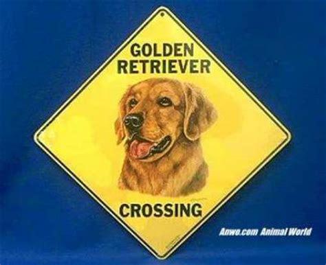 golden retriever signs golden retriever crossing sign from animal world 174