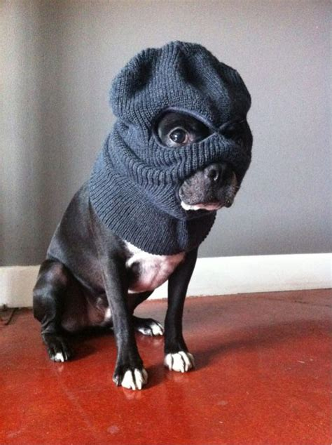 dogs robbing bank with ski mask dogs never i