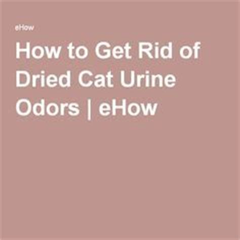 Removing Cat Urine From Carpet Naturally by Cat Urine Odor Removal Home Remedy Pet Urine Odor