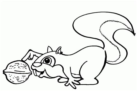 squirrel coloring pages squirrel coloring pages coloringpagesabc
