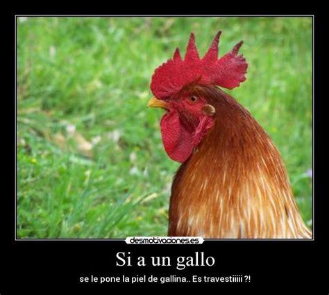 frases para gallos de rias usuario llegareealaprinci desmotivaciones