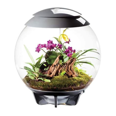 top 10 best terrariums wardian cases for your home