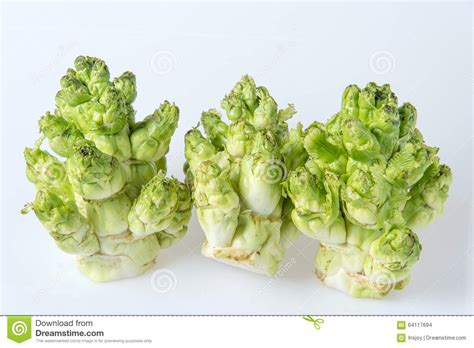 new year eats cabbage baby cabbage brassica juncea coss new