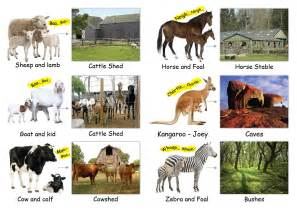 animal homes buy animal homes books animal homes book