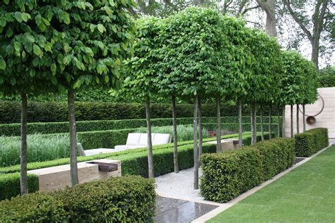 Topiary For Sale Uk - top 10 uses for plants in your garden growing nicely