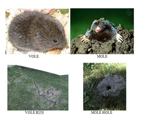 mole removal mn identification control and removal mn
