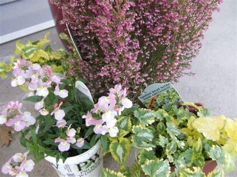 pianta da fiore piante da fiore perenni piante perenni piante da fiore