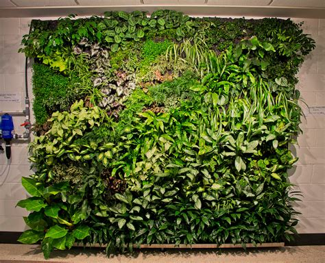 vertical garden sustainability siu