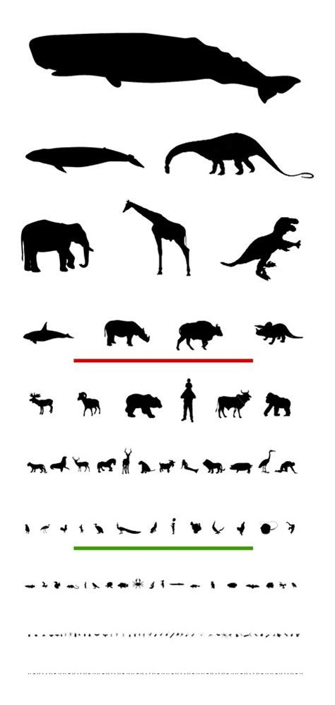 printable animal eye chart heres what you could have won dyslexic eye chart