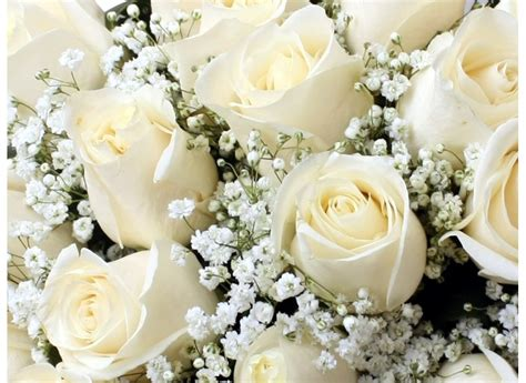significado de las rosas peque