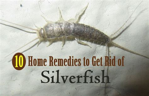 how do i get rid of a bench warrant how do i get rid of silverfish in my bathroom 28 images get rid of silverfish for