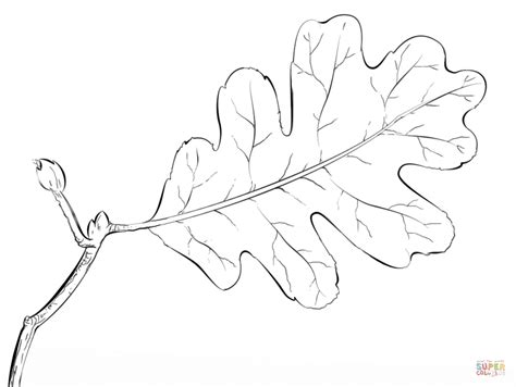 coloring pages oak leaf oak tree leaf coloring page free printable coloring pages