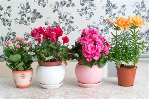 best indoor plants for oxygen the best oxygen producing house plants air purifier plants