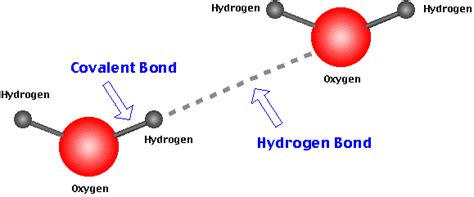 hydrogen bonding diagram how are hydrogen bonds related to cohesion exle