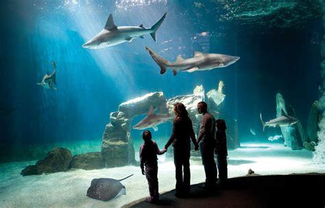 ingresso acquario di genova annunci gratuiti cambiobiglietto it acquario di genova