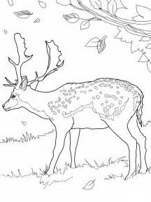 Printable Deer Coloring Pages sketch template