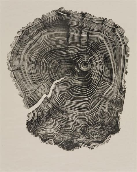 Tree Ring - the beautiful complexity of nature bryan nash gill