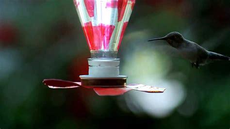 diy hummingbird feeder youtube