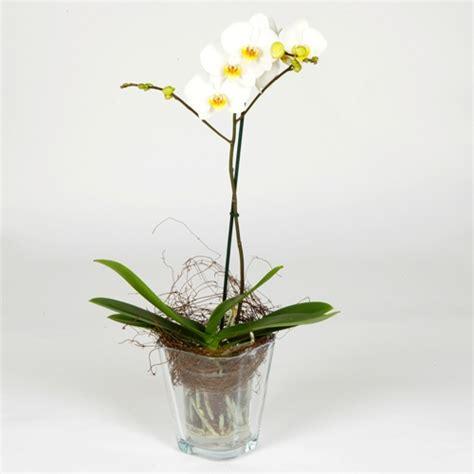 vasi per orchidee phalaenopsis