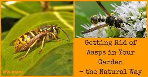 how to get rid of bees in backyard getting rid of wasps in your garden the natural way
