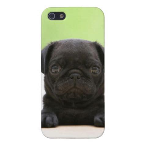 black pug phone black pug puppy phone for iphone 5 zazzle