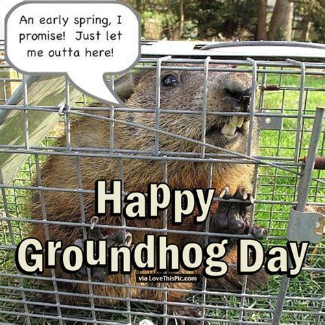 groundhog day am i right happy groundhog day quote pictures photos and images for
