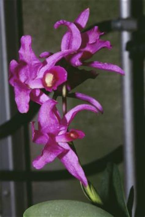 how to care for an orchid after blooming ehow uk